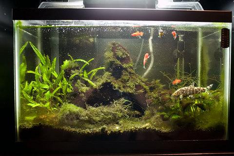 5 gallon fish tank 55 55 gallon 2017 fish tank for 5 gallon fish tank dimensions