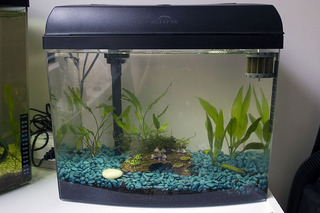 Eclipse 6 aquarium 1000 aquarium ideas for Eclipse fish tank